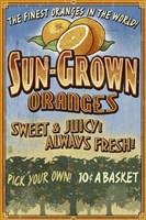 Sun Grown Oranges Fine-Art Print