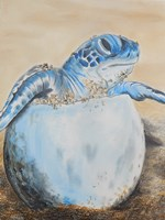Sea Turtle Hatching Fine-Art Print