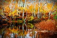 Fall Pond Colors 1 Fine-Art Print