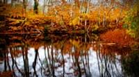 Fall Pond Colors 2 Fine-Art Print