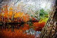 Fall Pond Colors 3 Fine-Art Print