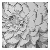 Dahlia Fine-Art Print