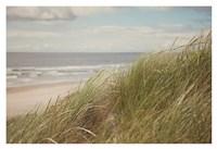 Beach Grass I Fine-Art Print