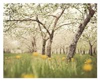 Quiet Orchard Fine-Art Print
