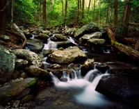 LeConte Creek, Great Smoky Mountains National Park Fine-Art Print