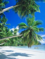 Mahe Seychelles Fine-Art Print