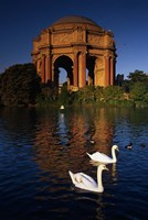 Swans and Palace of Fine Arts Fine-Art Print