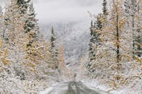 Empty Forest Road, McCarthy, Alaska Fine-Art Print