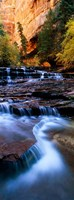 North Creek, Zion National Park, Utah Fine-Art Print