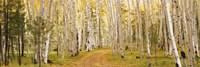 Dixie National Forest, Utah Fine-Art Print