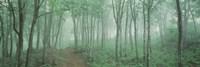 Forest Niigata Martsunoyama-cho, Japan Fine-Art Print