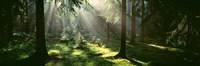 Forest, Uppland, Sweden Fine-Art Print