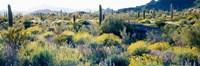 Desert AZ Fine-Art Print