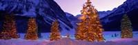 Christmas Trees, Lake Louise, Alberta, Canada Fine-Art Print