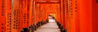 Tunnel of Torii Gates, Fushimi Inari Shrine, Japan Fine-Art Print