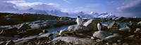 Penguins on Peterman Island Fine-Art Print