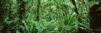 Monteverde Cloud Forest Reserve, Costa Rica Fine-Art Print