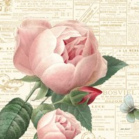 Roses in Paris V Fine-Art Print