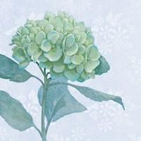 Blue Hydrangea I Crop Fine-Art Print