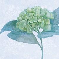 Blue Hydrangea II Crop Fine-Art Print