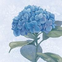 Blue Hydrangea IV Crop Fine-Art Print