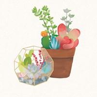 Succulent Garden III Fine-Art Print