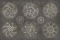 Rosette IX Gray Fine-Art Print