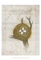 Nest - Goldfinch Fine-Art Print