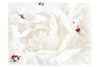 White Linen Peony I Fine-Art Print
