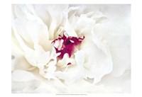 White Linen Peony II Fine-Art Print