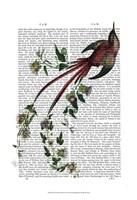 Passion Flower Bird Fine-Art Print