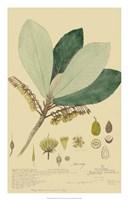 Tropical Descubes I Fine-Art Print