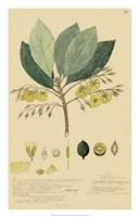 Tropical Descubes II Fine-Art Print