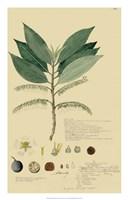 Tropical Descubes III Fine-Art Print