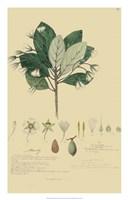Tropical Descubes IV Fine-Art Print