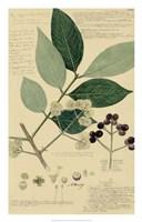 Descubes Foliage & Fruit I Fine-Art Print