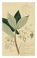 Descubes Foliage & Fruit III Fine-Art Print