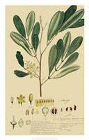 Descubes Foliage & Fruit IV Fine-Art Print