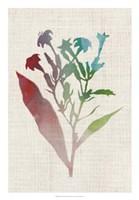 Watercolor Plants II Fine-Art Print