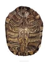Tortoise Shell Detail I Fine-Art Print