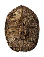 Tortoise Shell Detail II Fine-Art Print