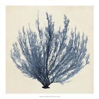 Coastal Seaweed III Fine-Art Print