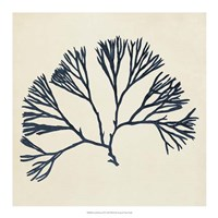 Coastal Seaweed VI Fine-Art Print