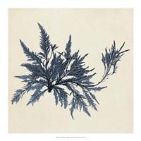 Coastal Seaweed VII Fine-Art Print