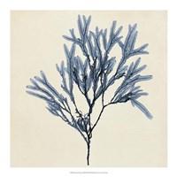 Coastal Seaweed VIII Fine-Art Print