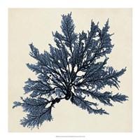 Coastal Seaweed IX Fine-Art Print