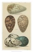 Antique Bird Egg Study I Fine-Art Print