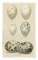 Antique Bird Egg Study II Fine-Art Print