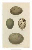 Antique Bird Egg Study V Fine-Art Print