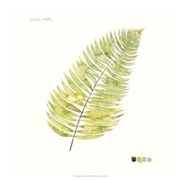 Watercolor Leaf Study IV Fine-Art Print